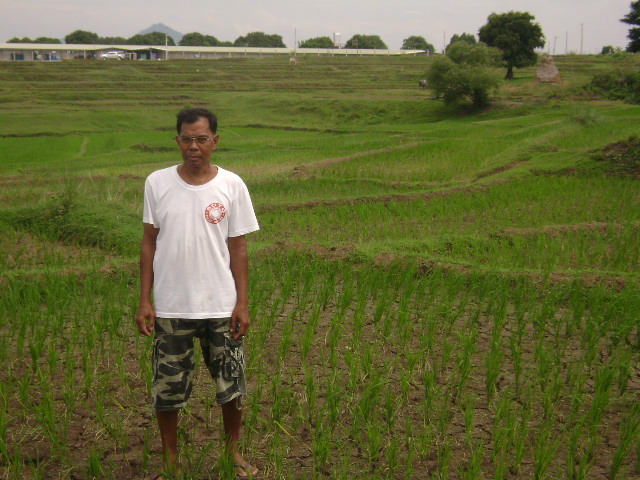 5.0 Tons Inbred Rice Technology Demonstration (1)