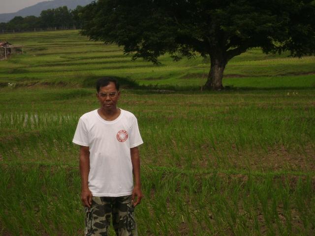 5.0 Tons Inbred Rice Technology Demonstration (2)
