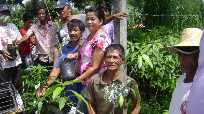 Distribution of 500 Grafted Mango Seedlings (1)