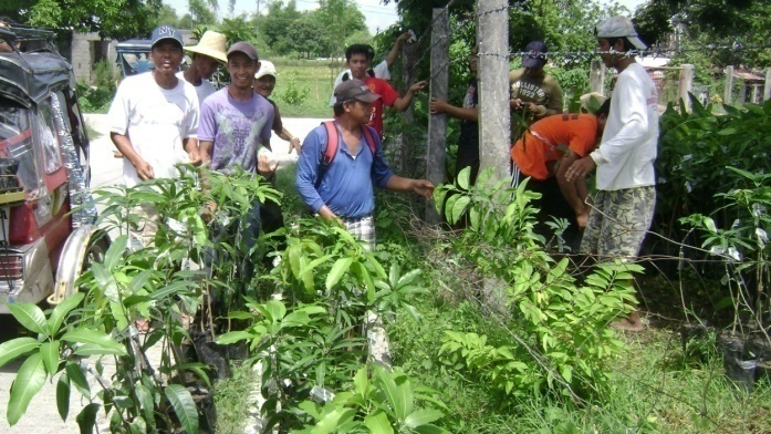 Distribution of 500 Grafted Mango Seedlings (2)