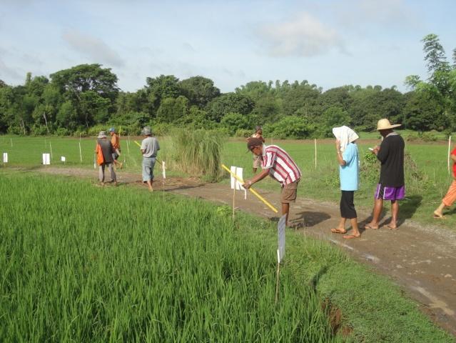 Farmer Field School on Rice-Mauban (1)