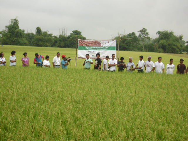distribution-of-hybrid-rice-seeds-1