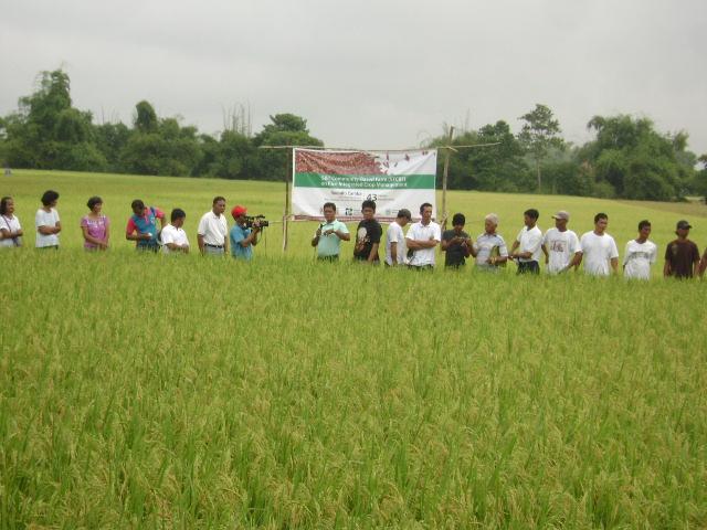 distribution-of-hybrid-rice-seeds-1