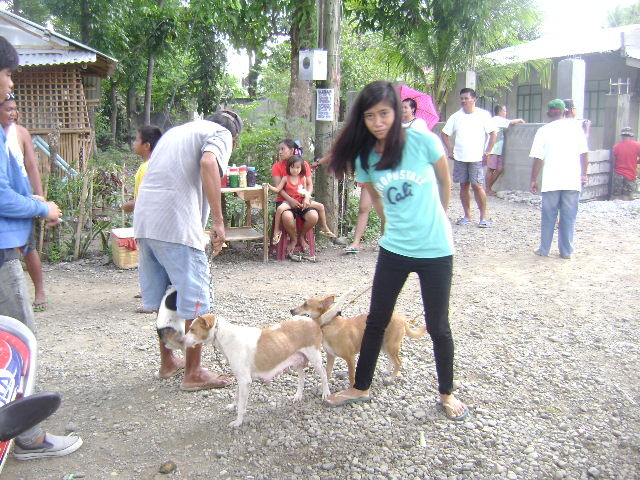 anti-rabies-vaccination-2