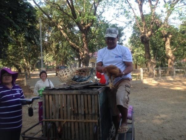 free-range-chicken-dispersal-under-agri-pinoy-livestock-banner-program-2