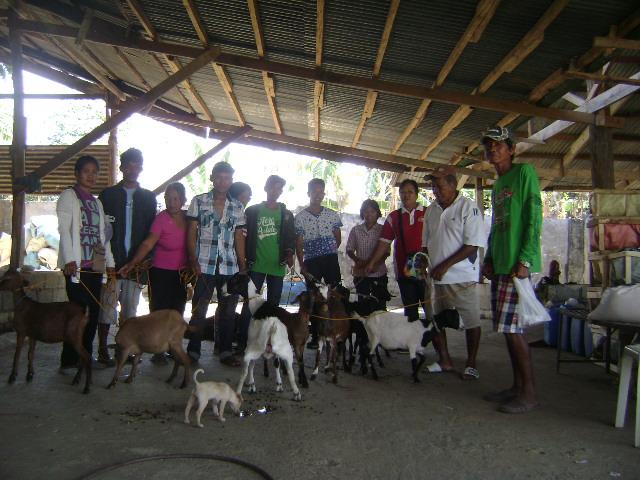 goat-dispersal-of-lgu-balungao-1