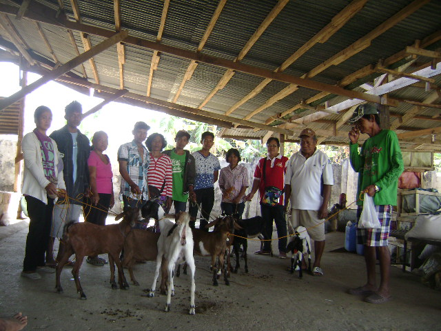 goat-dispersal-of-lgu-balungao-2